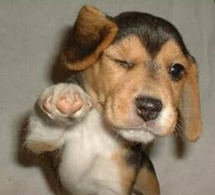 Service MOMO says hello to children's services via a cute dog picture